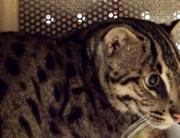 gato-pescador1