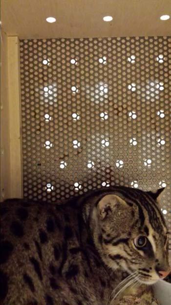 gato-pescador2